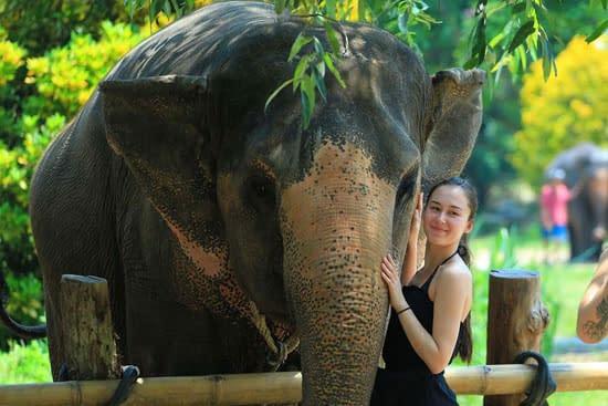 excursie krabi elephant house sanctuary