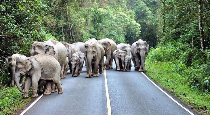 olifanten khao yai nationaal park excursie