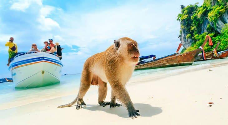 apeneiland krabi tour phi phi