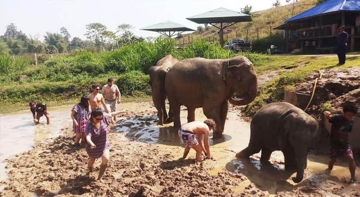 dagtrip olifanten verzorgen chiang mai