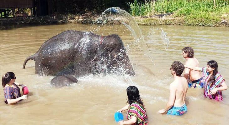 olifanten baden chiang mai excursie