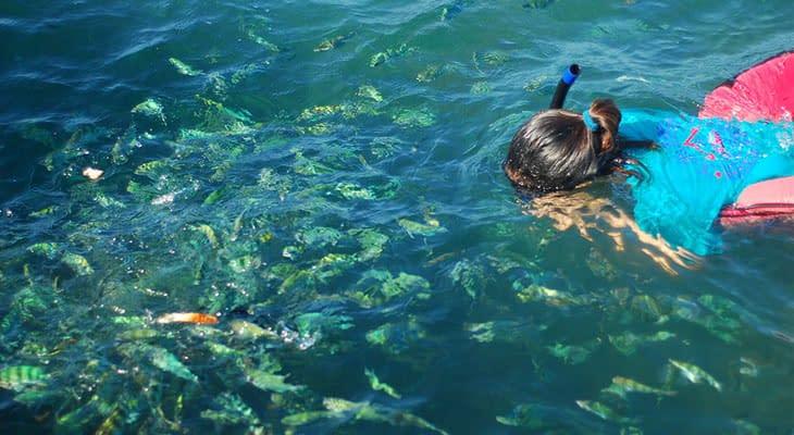 snorkelen bij koh taen roze dolfijnen