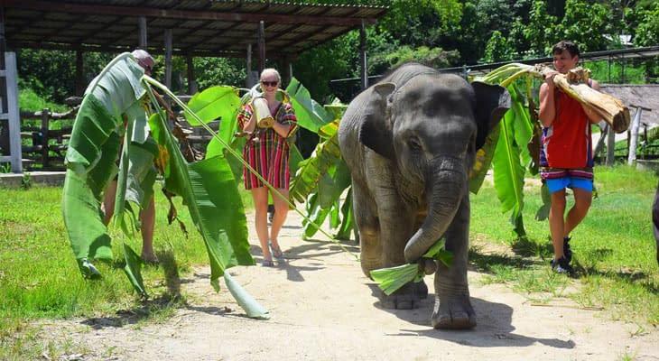zorg voor olifanten chiang mai