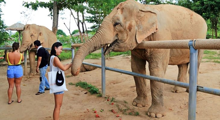 elephant sanctuary koh samui