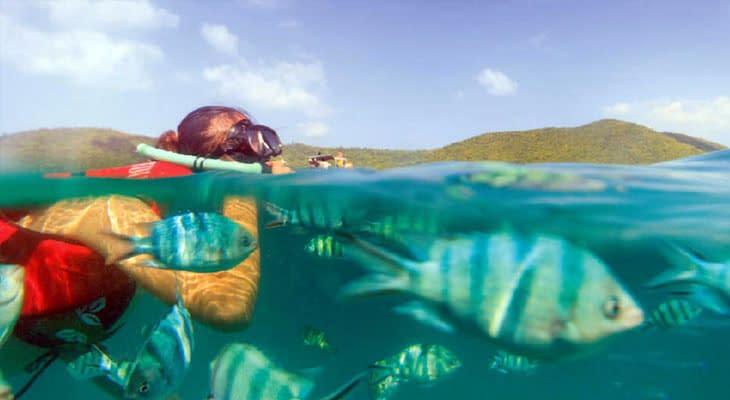 snorkelen roze dolfijnen tour samui