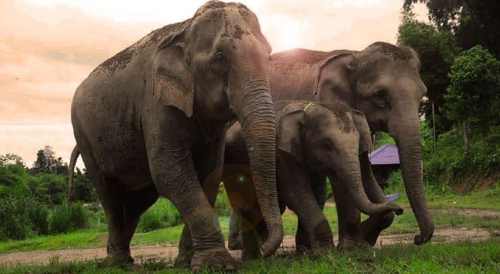 elephant retirement park excursie chiang mai