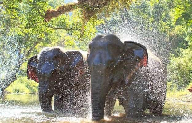 Halve dag elephant sanctuary park phuket