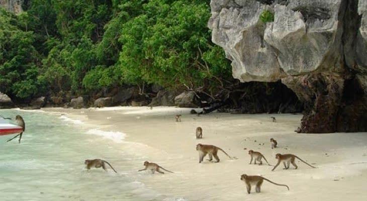 monkey bay Phi Phi en Khai eilanden per speedboot