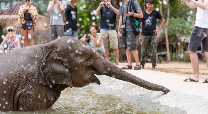 olifant modderbad koh samui