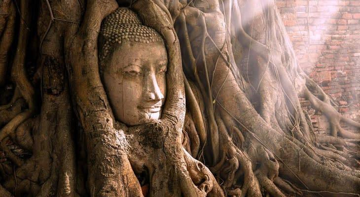 ayutthaya boeddhabeeld in boom excursie